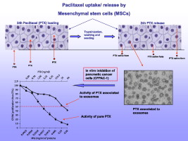 Paclitaxel-drug-delivery