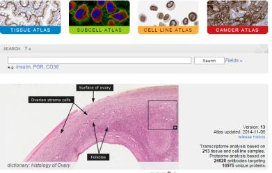The Human Protein Atlas