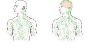 lymphatics-system