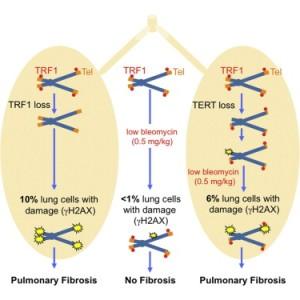 Telomeri-fibrosi