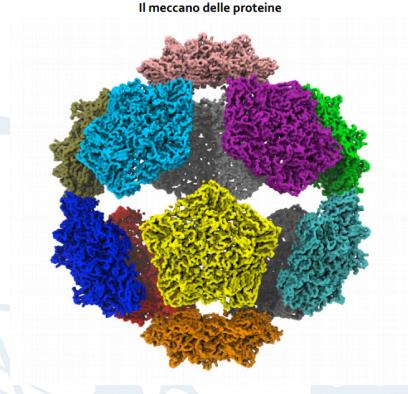 meccano-proteine