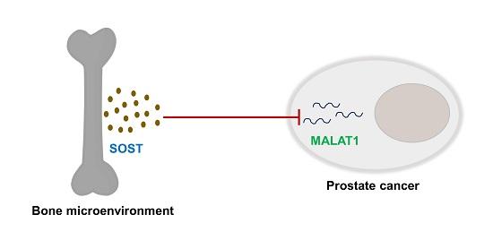 tumore alla prostata e midollo osseous