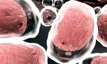 macrophages