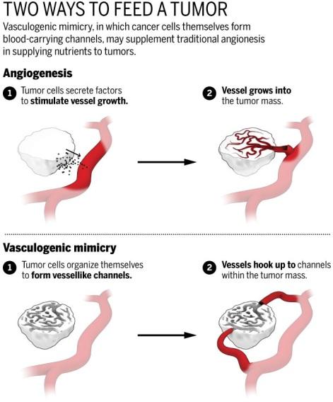 vascularMimicry