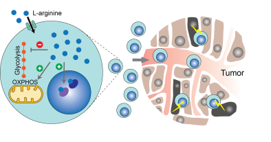 geiger_cell_paper