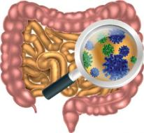 gut-bacteria-in-the-intestine