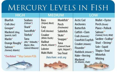 mercury-fish