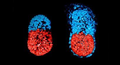 170303-embryo
