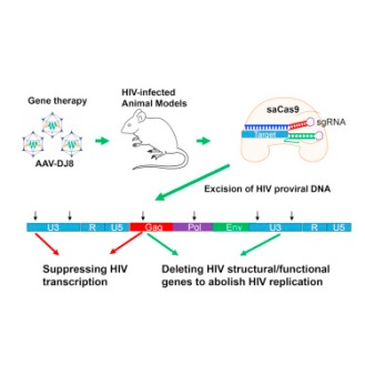 Cas9-HIV