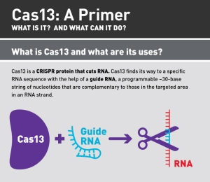 Cas13_infographic