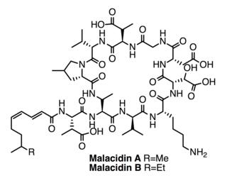 Malacidins