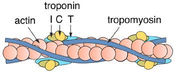 troponin