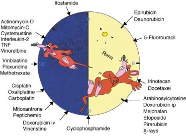Circadian-rhythms-in-anticancer-drug