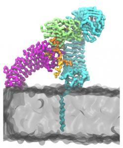 peptider-schmidtchen_2
