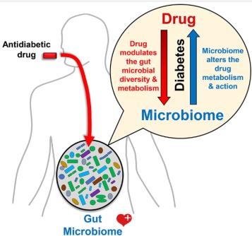 drug microbiome diabetics