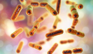 Bacteria Bacteroides fragilis, the major component of normal microbiome of human intestine