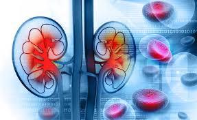 gastroprotettori-reni